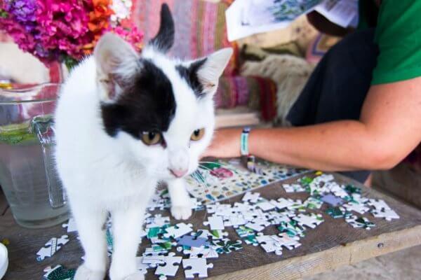 Puzzle kvetinový vzor Pucle Kristína Kemeníková mačka